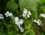 flori-muntii-bucegi-11