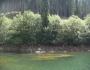 Lacul Bolboci