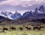 cavalli_al_pascolo_ai_piedi_del_massiccio_del_fitz_roy_patagonia
