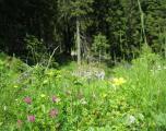 flori-muntii-bucegi-12