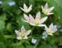 flori-muntii-bucegi-10