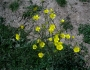 flori-muntii-bucegi-3