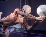 human-body-1