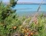 Vacanta in Sardinia - La Pelosa