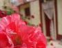 toate-casele-zante-imprejmuite-flori-viu-colorate