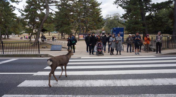 Japonia în zece zile. Despre căprioare și alte minuni în Nara