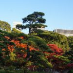 Tokyo Imperial Gardens - Japonia